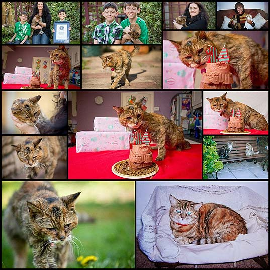 get-ready-to-meet-worlds-oldest-cat-14