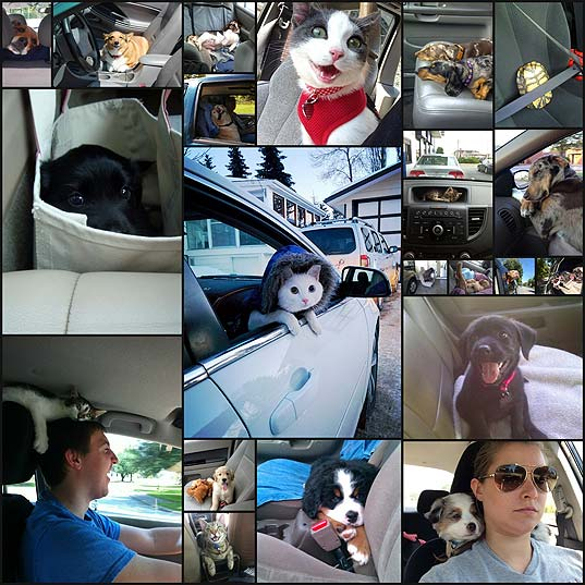 the-cutest-car-rides-ever21
