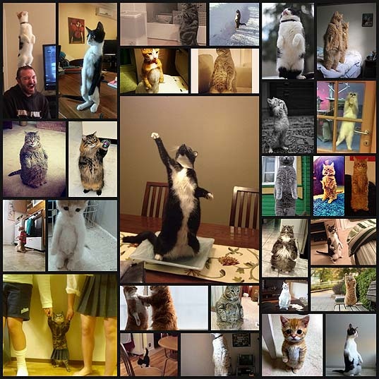 28-cats-standing-on-their-hind-legs