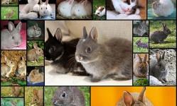 子ウサギ画像貼っていく35