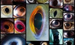 macro-photography-of-animal-eyes-suren-manvelyan30
