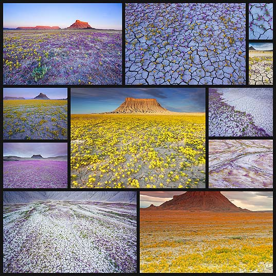utah-badlands-desert-flower-bloom-nature-photography13