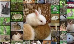 子ウサギの画像貼っていく51