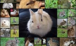 ふわふわの子ウサギ47