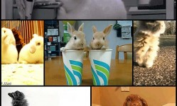 how-bout-a-bunch-o-bun-gifs6