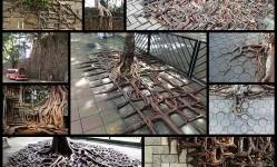tree-root-growing-concrete10