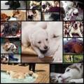 可愛い犬たちの親子写真(17枚)