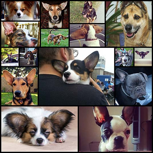 21-dogs-with-the-most-magnificent-ears-in-the-universe