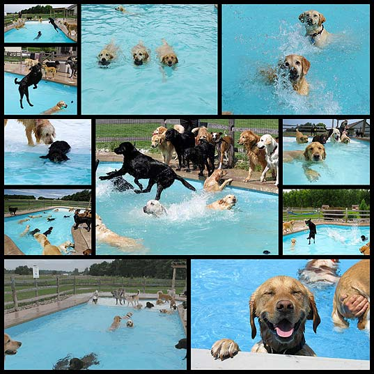 dog-pool-party-lucky-puppy11