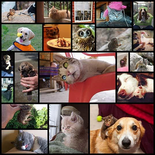 面白かわいい動物写真 21枚(2014/08/20)