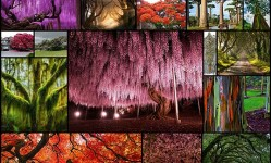 most-beautiful-trees20