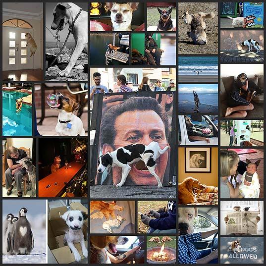 絶妙なタイミングで撮影された(されてしまった)犬たちの写真(25枚)