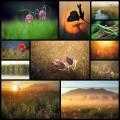Kilian Schönbergerによる幻想的な風景写真(11枚)