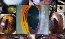 stunning-macro-photography-of-animal-eyes13