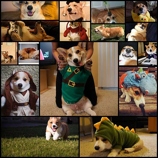 the-17-best-okcorgi-dating-profiles