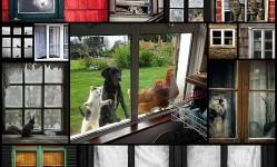 animals-in-windows18
