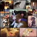 面白かわいい犬たちの写真(15枚)