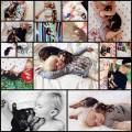 兄弟のように一緒に眠る犬と赤ちゃんの写真(16枚)