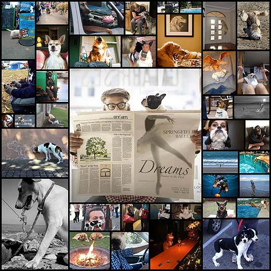 犬たちの決定的な瞬間をとらえた写真(40枚)