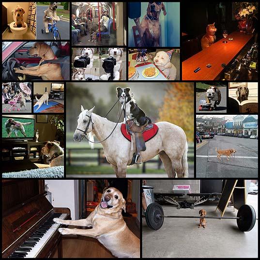 人間社会に溶け込んでる犬たちの写真(16枚)