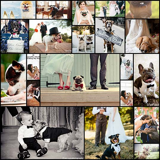wedding-day-dogs21