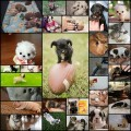 可愛すぎる子犬の写真(30枚)