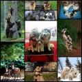 可愛い・ほっこりする動物家族の写真(10枚)