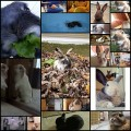 可愛いウサギの写真&gif動画(21枚)