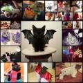 猫たちの可愛いハロウィンコスプレ(21枚)