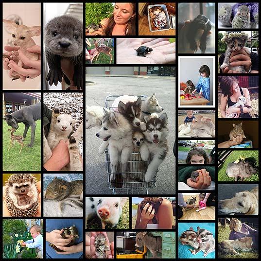 可愛い動物の赤ちゃんの写真(31枚)