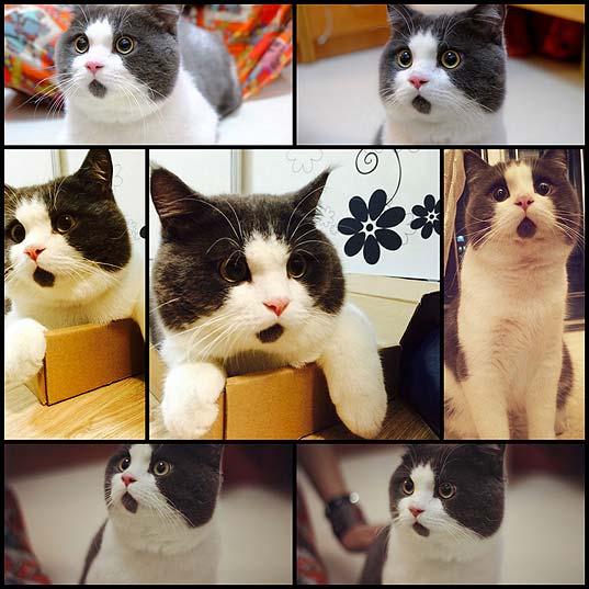 柄のせいで常に口をポカーンと開けてるように見える可愛い過ぎる猫の写真(7枚)