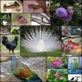 派手・特徴的な色をした動物たちの写真(20枚+)