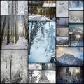 雪に覆われた森の写真(20枚)