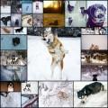 雪を喜ぶ犬たちの写真(27枚)