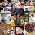 ティーカップに入った可愛い動物たちの写真(20枚+)