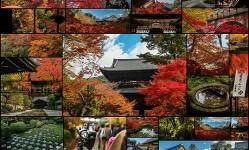 京都の紅葉撮って来たよー105