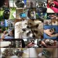 可愛いアライグマの写真(21枚)