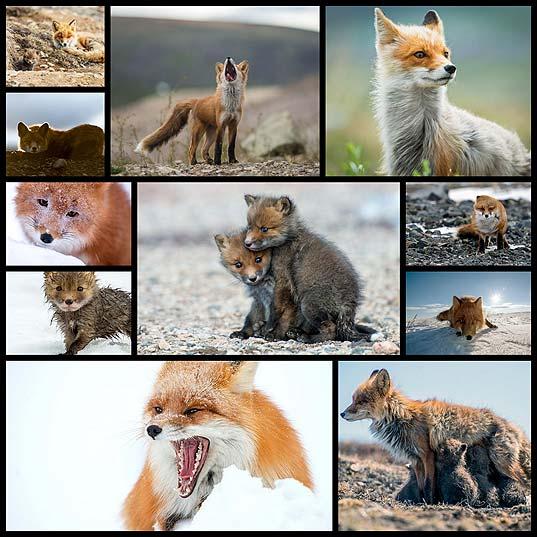 可愛いキツネの写真(11枚)