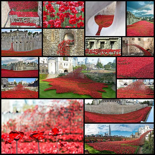 the-tower-of-london-poppies-blood-swept16