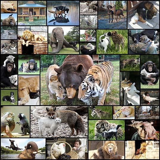異種間で仲がいい動物たちの写真(20枚+)