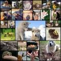 面白かわいい動物写真(27枚)