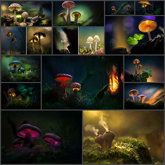 glowing-mushrooms-macro-photography-martin-pfister14