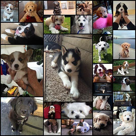 可愛い子犬の写真(27枚)