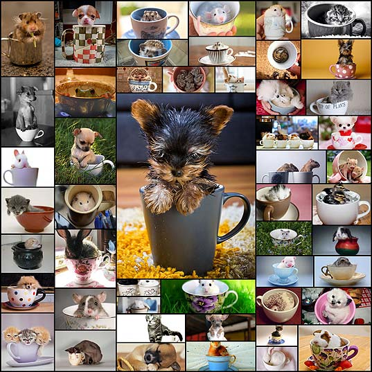 animals-in-cups50