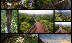 canopy-walkway-in-cape-town8