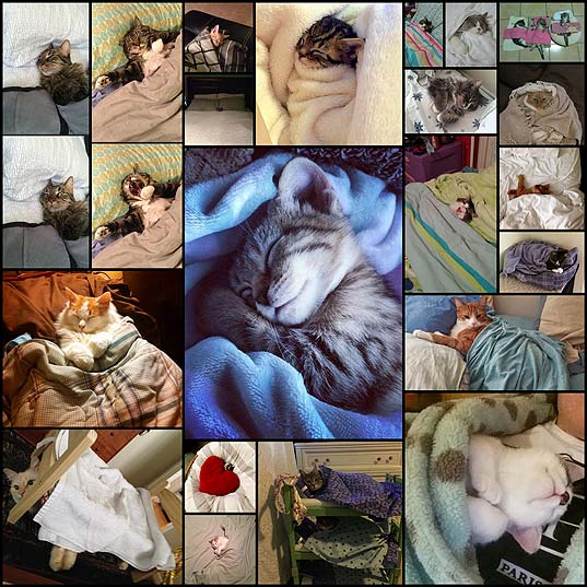 21-adorable-tucked-in-cats
