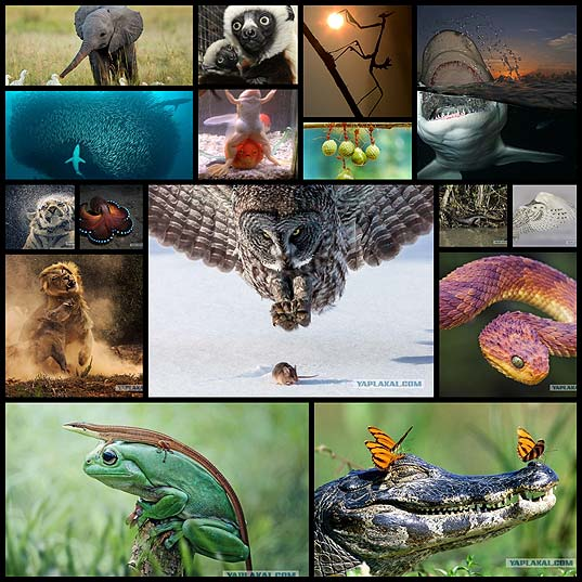 ワイルドな動物たち16