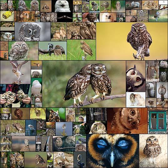 可愛いフクロウの写真100