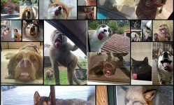 animals-licking-windows18
