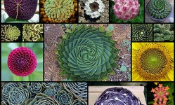 geometry-symmetry-plants-nature20